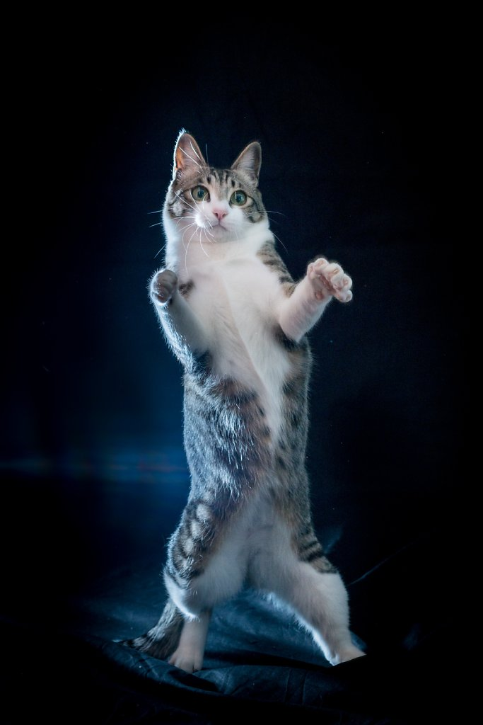 Thriller kitty