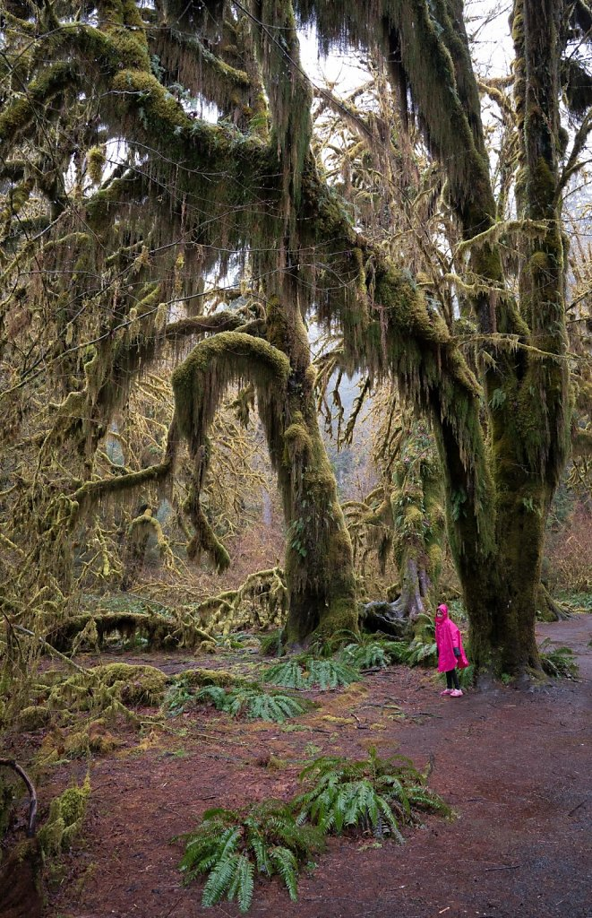 The forest may be a little scary, but these old trees befriend l