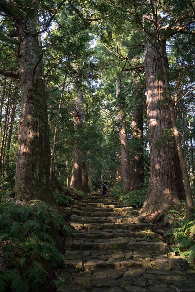 Daimonzaka steps through the forest up to Nachi Falls